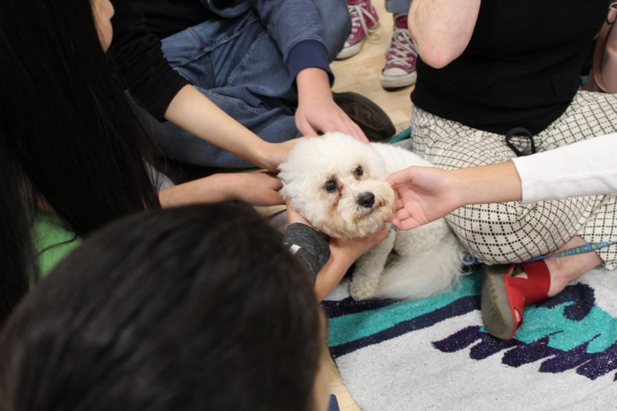 Students gather around a puppy on Waggy Wednesday during Wellness Week.