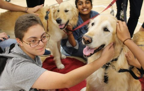 Two students smile with a pair of golden retrievers