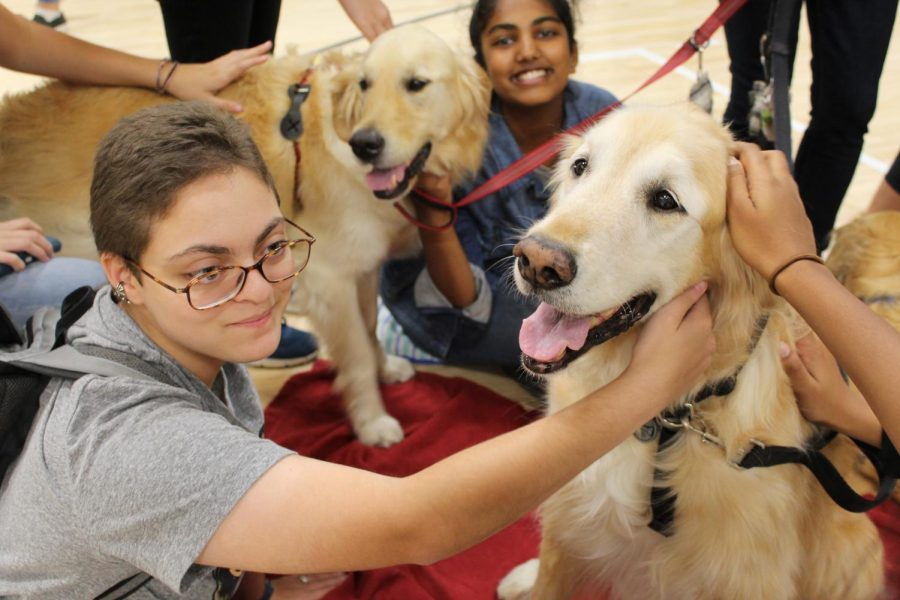The arrival of Wellness Week brings de-stressing activities for students