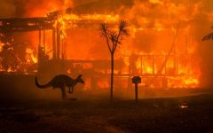Fires in Australia ravages landscape and ecosystems, could have far-reaching consequences